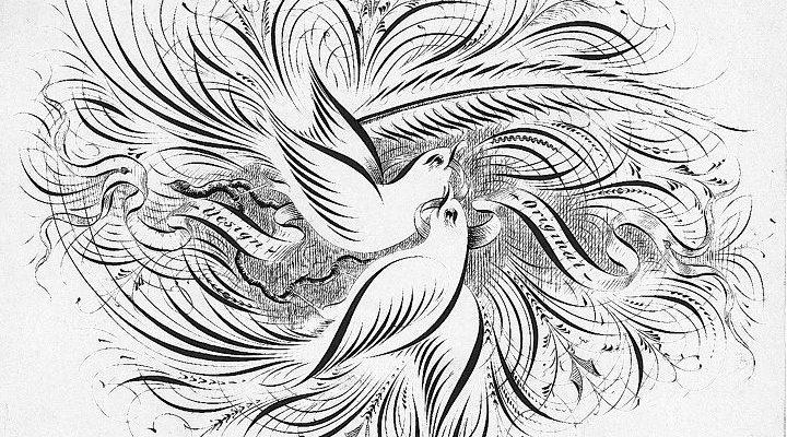 Рисунки тонким пером. Каллиграфические птицы с инструкцией по выполнению.
